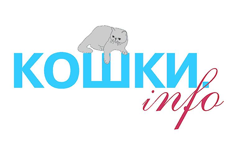 Кошки Инфо