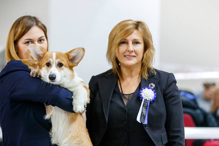 Показ собаки в ринге: путь к пьедесталу
