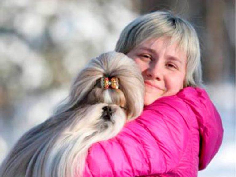 Груминг ши-тцу с щенячьего возраста до зрелости