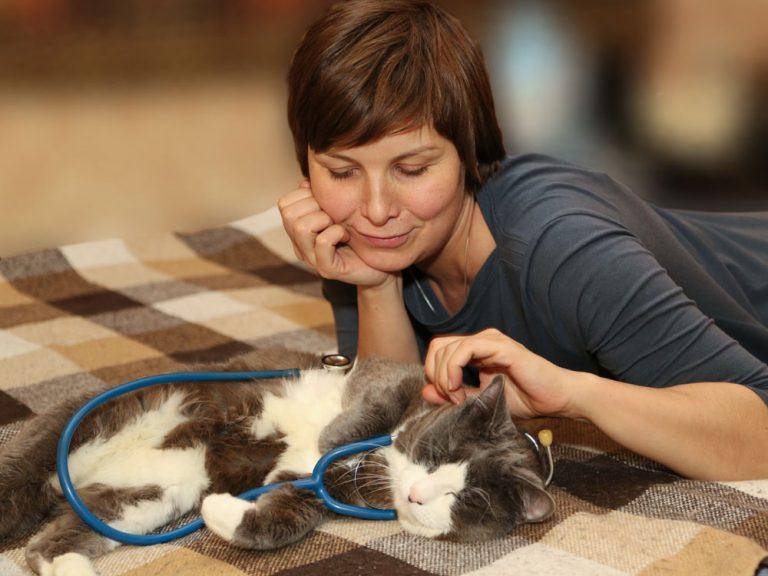 Геополитические конфликты у кошек