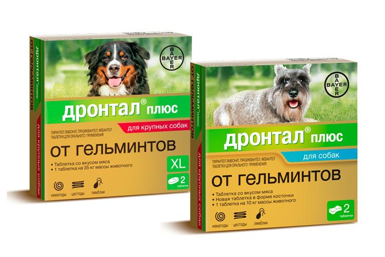 Таблетки Дронтал® плюс действуют на самые распространенные виды гельминтов и простейших – лямблий